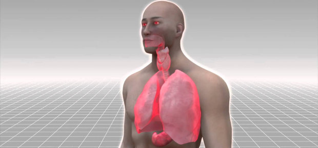 chloras žmogaus organizme