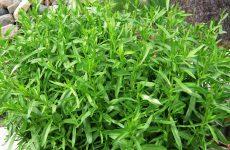 Peletrūnų auginimas ir naudingosios savybės