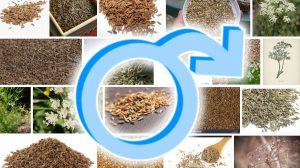 Kmynų arbatos poveikis vyrams