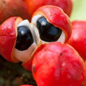 Guaranos vaisiai