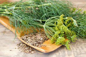 Krapų žolė ir sėklos arbatai