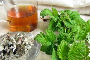 Aviečių lapų arbatos poveikis